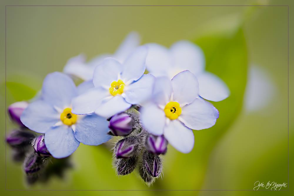 Champa Paris -The spring is coming and brings back with him the most beautiful flowers - photo TYN-Fleur11